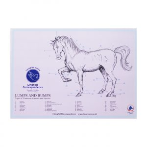 Lumps and Bumps Equine Chart
