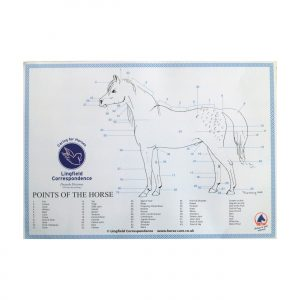 Points of the Horse Equine Chart