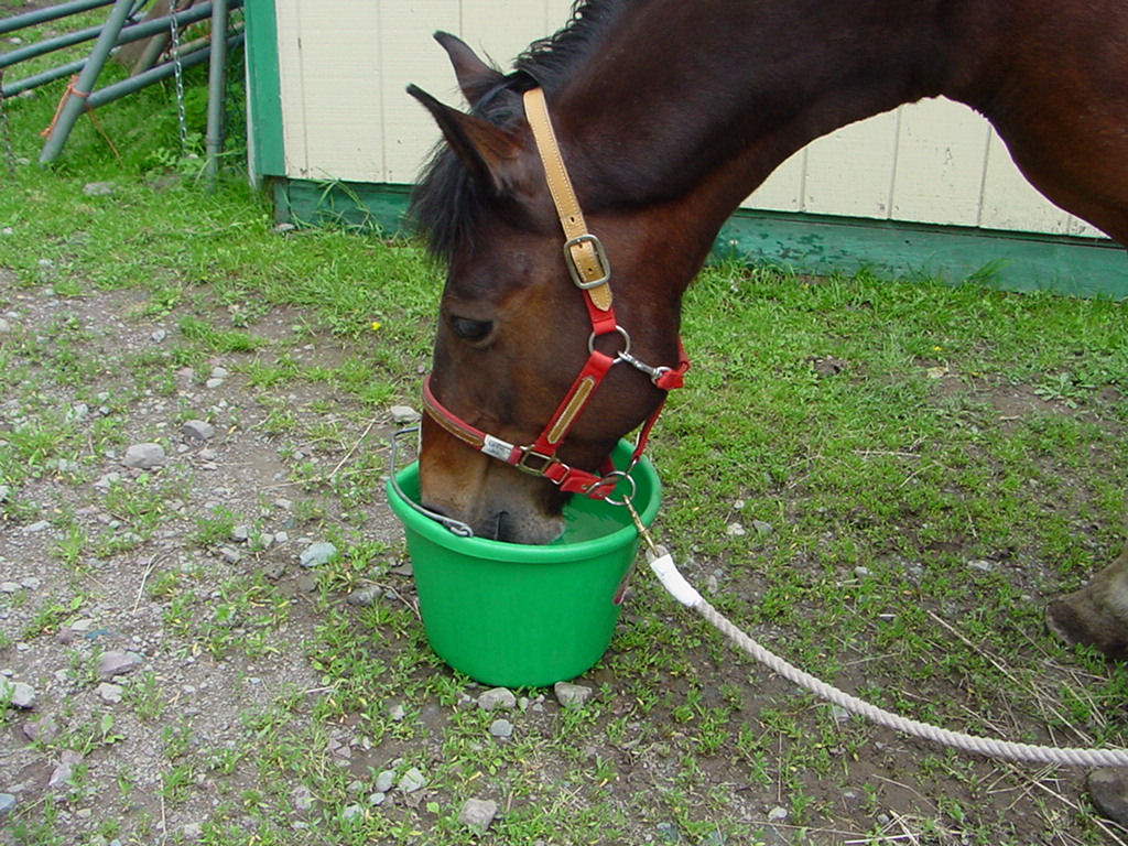 Spring Greens for Horses
