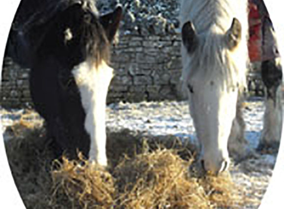 winter-hay-copy22